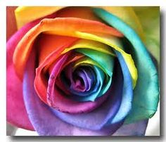 rainbow rose :D ... I want one! where do I get it?