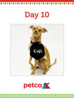 Here is today's 12 Days of Pinterest featured image (12/12/2012). Pin this image of Kevin and his Coal Squeaking Toy to one of your boards for a chance to win a 500 dollar Petco shopping spree, plus 500 dollar Petco Gift Card for a Petco Foundation Shelter/Rescue of your choice. Winner will be announced tomorrow (12/13/2012) between 12 pm and 5 pm Pacific Time. Good luck!