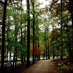 Only in Arkansas Fall at Garvan Woodland Gardens - First Security Bank