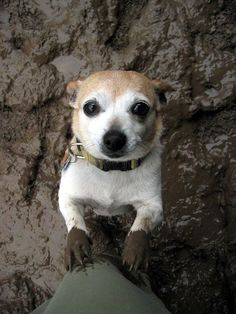 Love comes with muddy paws