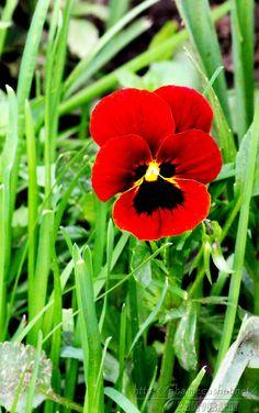lil flower red !