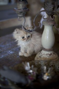 An ordinary kitten will ask more questions than any five-year-old.  ~Carl Van Vechten