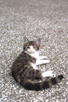 Felted cat. Zhongshan