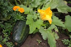 Adding flowers to your vegetable garden.