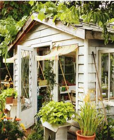 built from old barn planks and vintage windows and made into a greenhouse