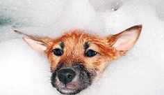 """homemade dog shampoo. one that rids of that """"wet dog"""" smell..have to try this, you can control ingredients!"""