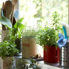 5 Things To Help Your Houseplants