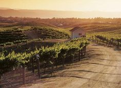 Wine Country, Temecula, California