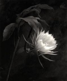 Candace Dwan Gallery - Cy DeCosse - Flowers and Other Sensual Pleasures