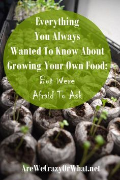 Everything  You Always  Wanted To Know About  Growing Your Own Food:  But Were  Afraid To Ask~AreWeCrazyOrWhat.net