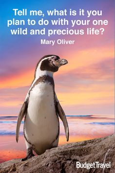 """""""Tell me, what is it you plan to do with your one wild and precious life?"""" --Mary Oliver"""