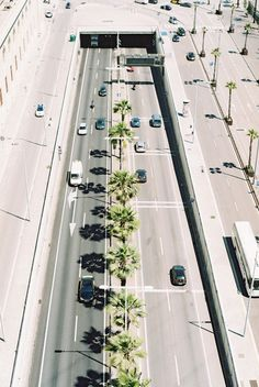 palm treessssssss
