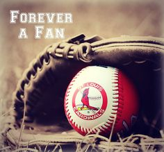 Forever a St Louis Cardinals Fan! basebal cardin, cardin nation, st louis cardinals, sport, st.louis cardinals, basebal heaven, stl cardin, cardin fan, stloui cardin