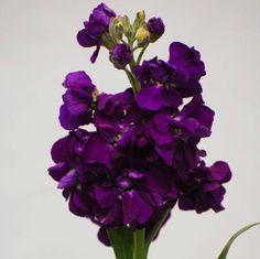 Royal Purple Wedding Florals