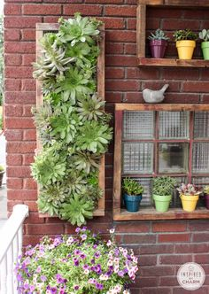 Hens and Chicks Wall Planter via Inspired by Charm...love this!