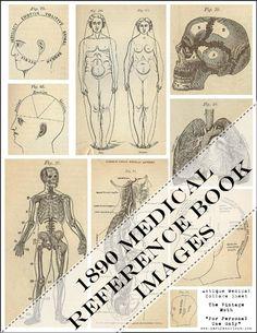 thieme atlas of anatomy 2nd edition pdf