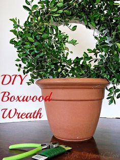 Get the Designer Look for Less by Making Your Own Boxwood Wreath.  Find the Tutorial at Mrs. Hines' Class