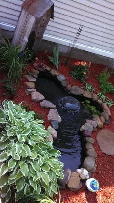 Love this little pond with the red mulch.