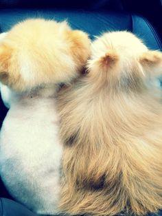 I wish I could make a coat made of dog fur, but no I wouldn't. Ever.