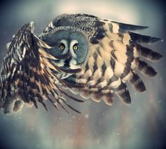 Owl in flight ~ stunning.