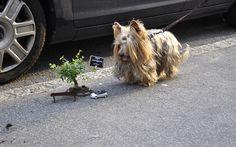Doggonit, how'd he make that tiny Pothole garden?