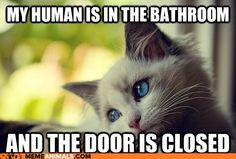 My cat--every day.