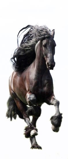 ♥Beautiful : Year of The Horse