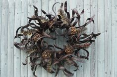 A wreath of honey locust seedpods, feathers and acorn caps for Berkshire Botanical Gardens Gallery of Wreaths. Unruly branches, dried flowers and seedpods, edible herbs and even wild mushrooms have starring roles in wreathes, centerpieces and other holiday decorations.