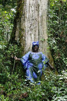 Wangari Maathai - in pictures