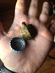 aww! tiny turtle!!