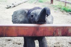 Fantic was a baby elephant in 2009