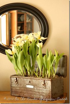 Tulips in a tool box