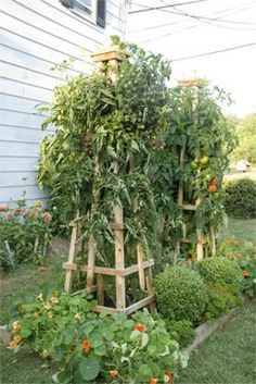 Instructions for a sturdy tomato tower. And it looks cool too!
