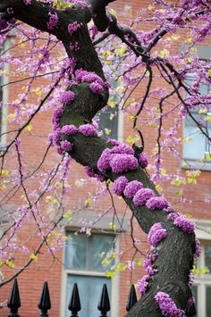 plant, red, tree trunks, flowering trees, pink, flowers, garden, branches, blossoms