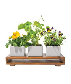 Edible-Flowers Kit:   Skip the garden-variety box of chocolates. Instead, charm an epicure with a trio of flowers that can top spring salads. The kit includes seeds for lemon pansies, nasturtiums, and violas.  To buy: $55.96, redenvelope.com.