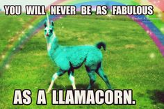 ERMERGERD. NOW IM A LLAMACORN, UNICORN, BANANA, LLAMA, HUMAN, FEMALE, FAB PERSON AND IM ALSO TINKERBELL.