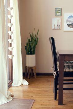 snake plant (Sansevieria) / home of Amanda Wright