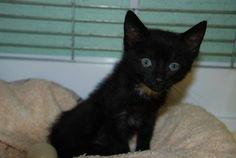 une trentaine de chatons à l'adoption. SPA d'Oyonnax(Ain)