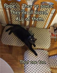asshol cat, silly cats, funny cats, cat save, black cats, save seat