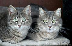 Domestic cats by Darko Plohl, via Dreamstime