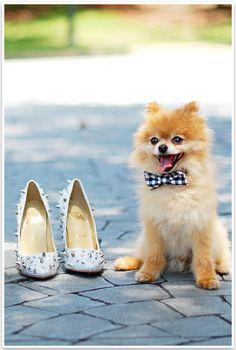 No-Sew Doggie Bow Tie   Pretty Fluffy