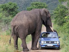 African Safari. As much as I love Elephants this would freak me out.