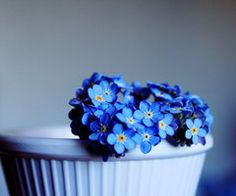 Forget me not, you silly thing