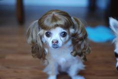 no words... Chihuahua haha...