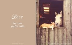 Horse + Kitty = Love  (Florabella Photoshop Actions)
