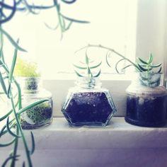 tiny plants in old ink jars