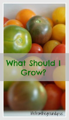 What to Grow 2 - lifefromthegroundup.us