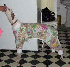Dog Pajamas = Awesome