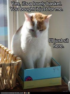Lovely Basket for kitteh