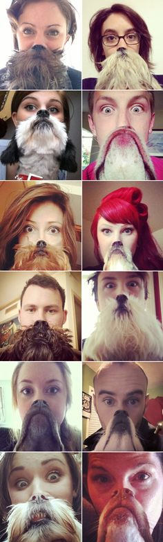 "Heard of ""Cat Bearding?"" Well, now's there is ""Dog Bearding"" #funny #hilarious #dogs"